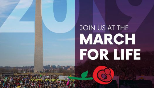 Join a bus trip leaving from CT to the March for Life January 17th-18th!